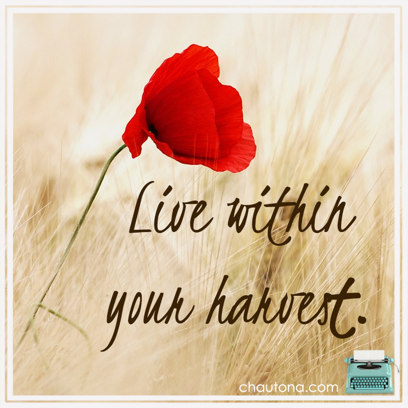 Live within your harvest for financial freedom